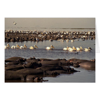 Hippos and pelicans card