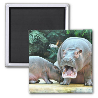 Hippos Magnet