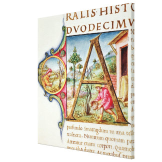 Historiated initial 'A' depicting Canvas Prints