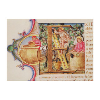 Historiated initial 'E' depicting grape picking Canvas Prints