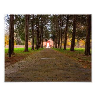 Historic Christ Church - Cedar Lined Walkway Photo Print