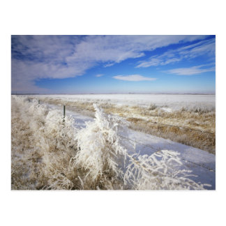 Hoarfrost coats tumbleweed and fenceline near postcard