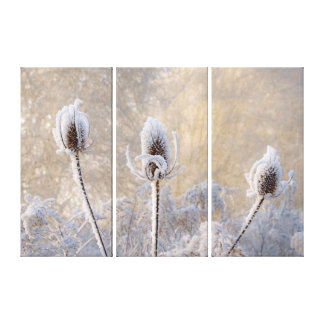 Hoarfrost on Teasels Winter Photo Scenic Nature . Canvas Print