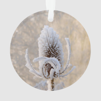 Hoarfrost on Teasels Winter Photo Scenic Nature ** Ornament