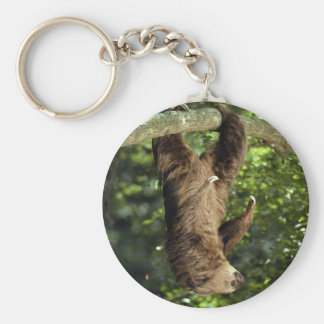 Hoffmann's two-toed sloth key ring