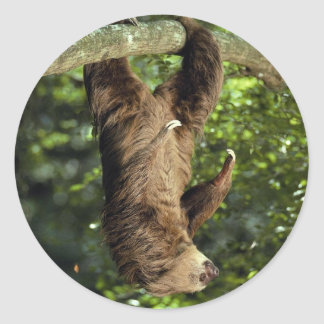 Hoffmann's two-toed sloth sticker