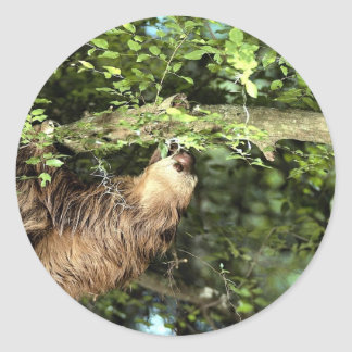 Hoffmann's two-toed sloth round sticker