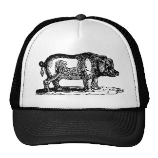 Hog Cap