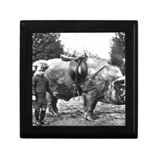 Hog Rider Gift Box
