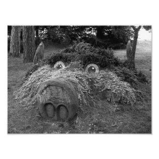 Hogs Head, Bute Park, Cardiff Photo