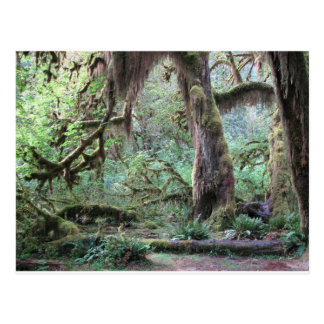 Hoh Rain Forest - Olympic National Park Postcard