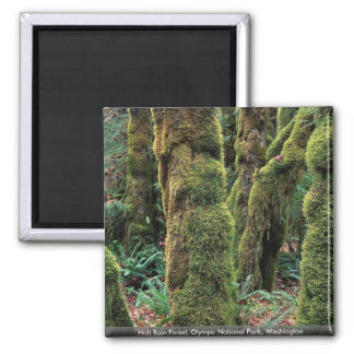 Hoh Rain Forest, Olympic National Park, Washington Magnet