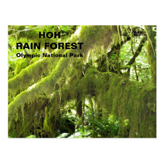 Hoh Rain Forest Travel Postcard