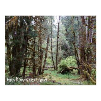 Hoh Rainforest, Washington State, Postcard