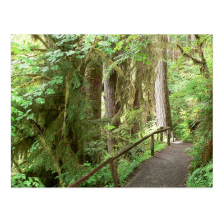 Hoh Valley Rain Forest Postcard