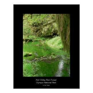 Hoh Valley Rain Forest Poster stream