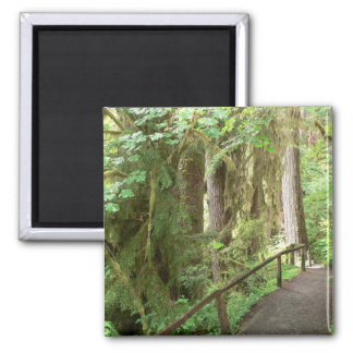 Hoh Valley Rain Forest Square Magnet
