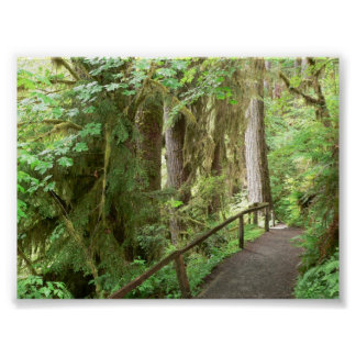 Hoh Valley Rainforest Trail Poster