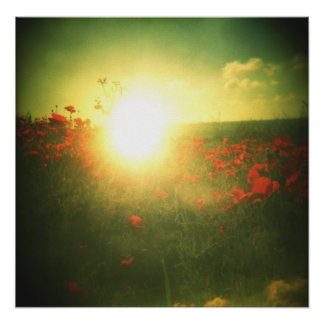 Holga poppy sunrise print