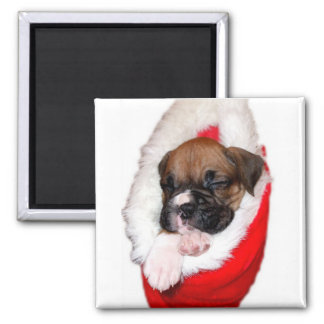 Holiday boxer puppy magnet