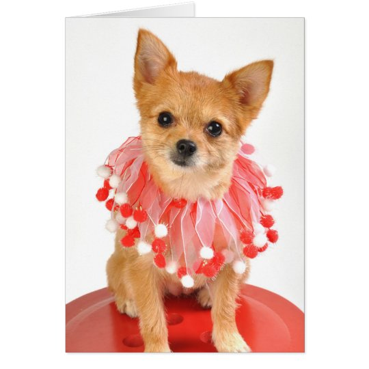 Holiday Chihuahua Card