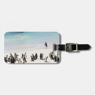 Holiday For Penguins Bag Tag
