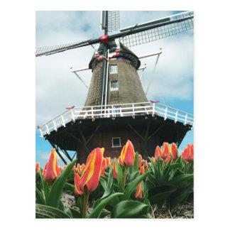 Holland Tulip Time Flowers Windmill Postcard