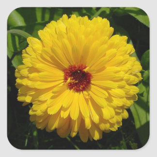 Holligold Blossoming Yellow Pot Marigold Flower Square Sticker