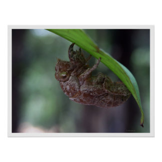 hollow bug print