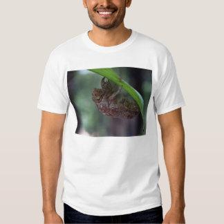 hollow bug tee shirt