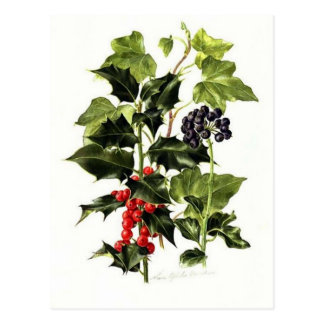 holly and ivy design Christmas Postcard