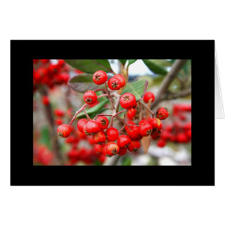 Holly Berries Greeting Card and Note Card