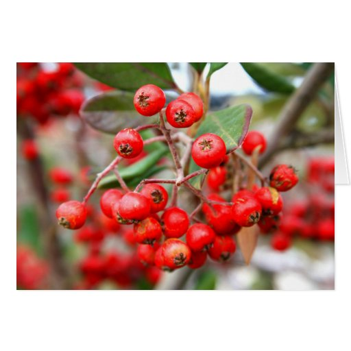 Holly Berries Greeting Card,Note Card