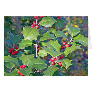 Holly Berries nature Cards