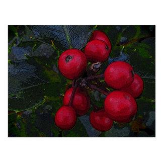 Holly Berries Postcard