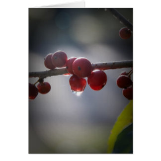Holly in Water Droplets Greeting Card