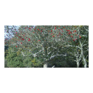 holly tree in New Forest Picture Card