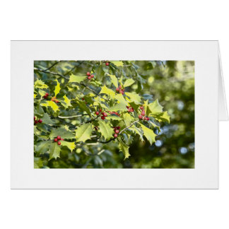Holly With Berries Greeting Card