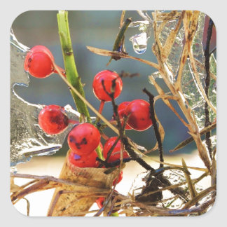 Hollyberries in Ice Square Sticker