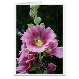 Hollyhock Card