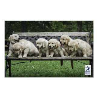 Holly's Half Dozen bench poster