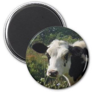 Holstein Cow 6 Cm Round Magnet