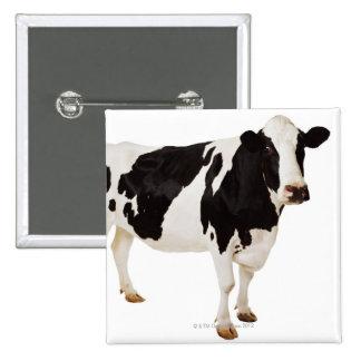 Holstein cow (Bos taurus) 15 Cm Square Badge