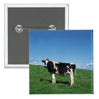 Holstein cow standing in field, Bekkai-Machi, 15 Cm Square Badge