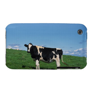 Holstein cow standing in field, Bekkai-Machi, iPhone 3 Cover