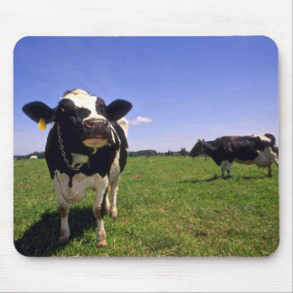 Holstein Dairy Cattle Mouse Pad