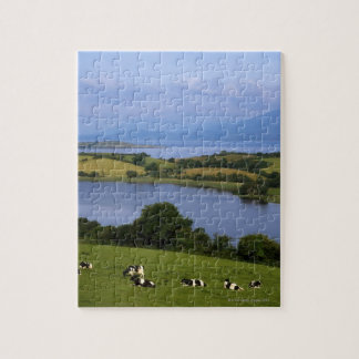 Holstein-Fresian Cattle, Bantry Bay, Co Cork, Jigsaw Puzzle