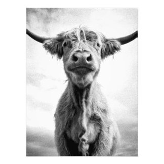 Holy Cow Mesotint Style Art Photography Photo