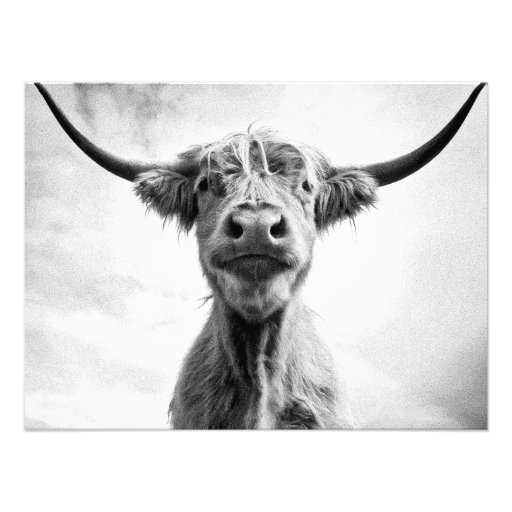 Holy Cow Mesotint Style Art Photography Photographic Print