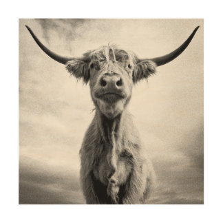 Holy Cow Mesotint Style Art Photography Wood Canvases
